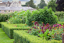 The parterre beds at Parham House with Amaranthus paniculatus 'Red Fox', Tithonia rotundifolia 'Torch' , Courgette 'Green Bush' and sunflowers