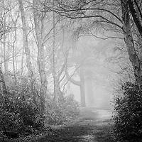 Misty wood, UK