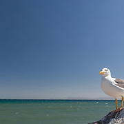 Close Up of a Seagull looking at the ocean. Loreto. Baja California Sur, Mexico.