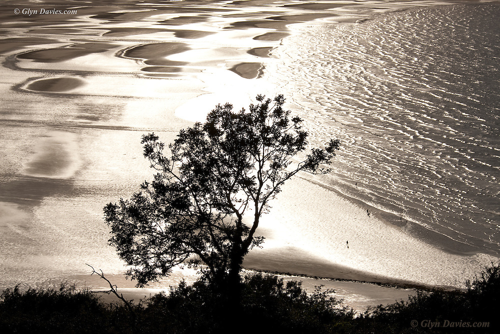 A hillside tree is sillouetted by dramatic sunlight reflecting off the vast bay of Traeth Coch, (Red Wharf Bay) which at low tide reveals a pattern of sand cusps in the wet sand which reflect the bright sunshine. Small figures at the water's edge on the shoreline show the scale of this beach. <br /> <br /> Following a specific location request from one of my customers, I found myself (almost) lost outside Llangoed on a warm late summer's afternoon. The sunshine back-lit the leaves of lush overgrown lanes as Cara Dillon sang to me in the front of the van. The hedgerows literally brushed past me as I ventured into narrower and narrower pathways, crows giving buzzards a temporary reprieve as they laughed at my black VW squeezing it's way out towards the bay.<br /> <br /> The shallow beach at extreme low tide creates huge cusps of sand and water, resembling textile designs from the 1960s! The vicious and burning intensity of the light on the retina was not from the sun itself but from it's reflection on the wet sand. Although I tried to compose using peripheral vision I still was left temporarily blinded after shooting some frames.<br /> <br /> Of course the contrast between the sunlit sand and the dry areas surrounding, meant the contrast was of the scale. To me, this was wonderful though, for just as looking towards the light blinded me, I found the fake shadows to be a beautiful and textural contrast, absolutely stunning.
