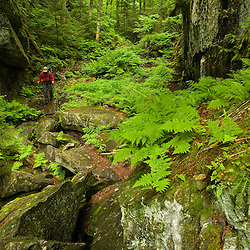 A hiker in Devil's Gulch in Eden, Vermont.  The Long Trail.  Green Mountains.  Summer.  Backpacking.