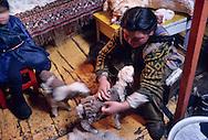Mongolia. horses race with kids. On the steppe with snow . Malah      Malah       /  jeune cavalière avant la course, emmitouflé pour se protéger du froid /  course de chevaux pour enfants  sur la steppe enneigee  Malah  Mongolie    14       P0003557