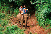 THAILAND, GOLDEN TRIANGLE Elephants in lumbering camp in jungle north of Chiang Mai, tourists taking jungle rides