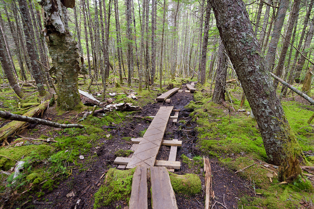 Hiking trail bog crossing Cutler Land Reserve, Cutler Maine. USA