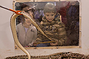 Young children react to a western diamondback rattler during the 51st Annual Sweetwater Texas Rattlesnake Round-Up March 14, 2009 in Sweetwater, Texas. During the three-day event approximately 240,000 pounds of rattlesnake will be collected, milked and served to support charity.
