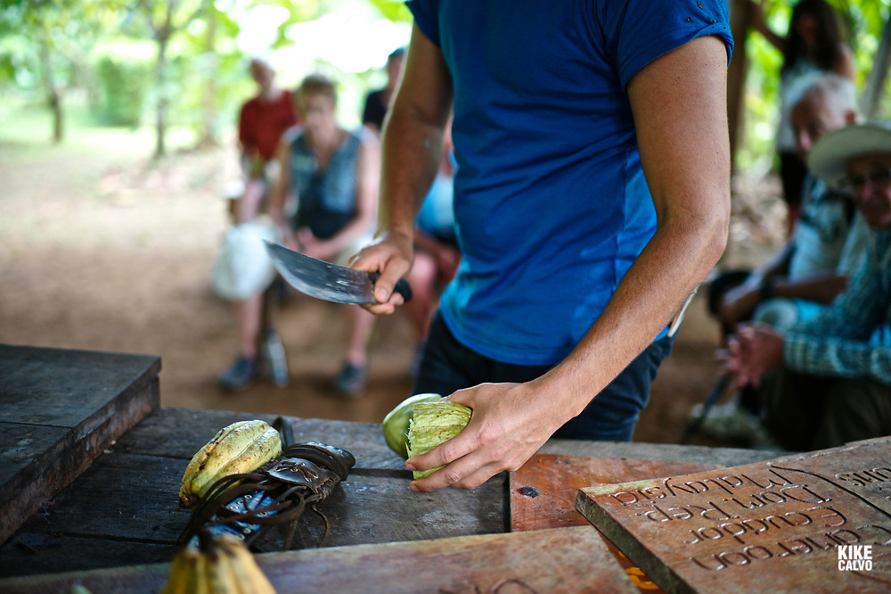 Guide cuts a cacao fruit in half during a cacao farm tour