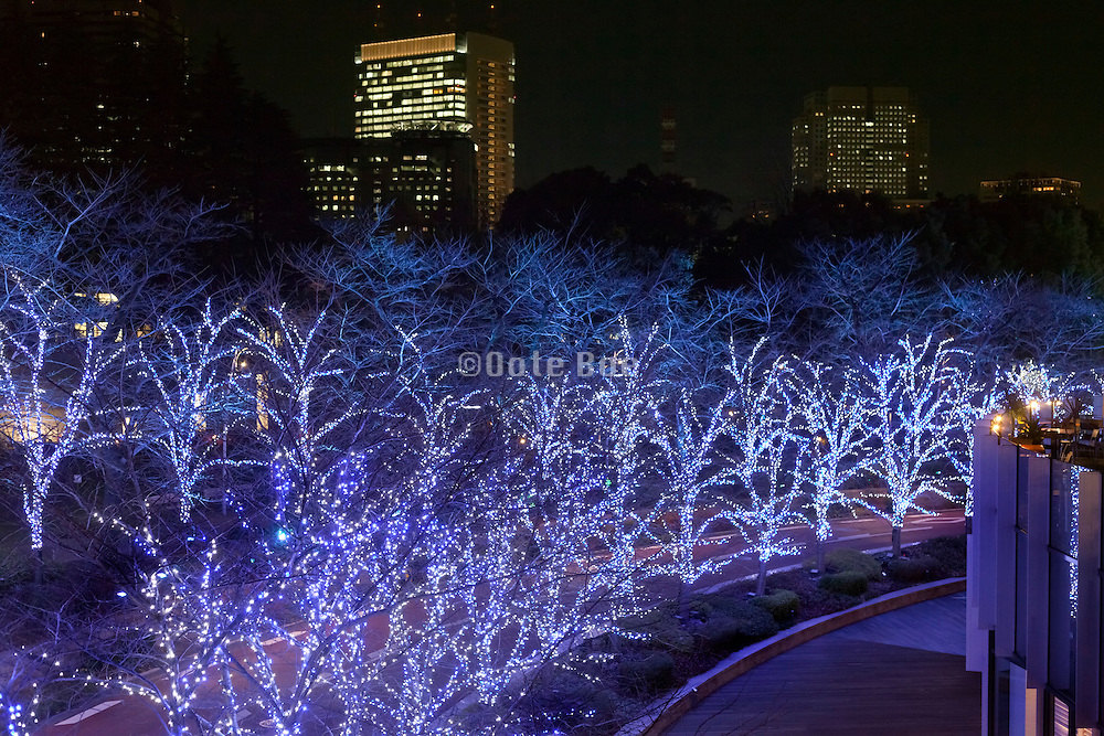 trees with led lights night Tokyo Midtown Japan