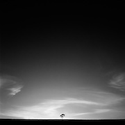 Lone Tree,  Muswellbrook, Hunter Valley, Australia.