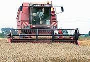 Frankrijk, Armentieres, Lille, 18-8-2013Een veld met tarwe, graan wordt door een combine geoogst. Tarweveld,graanveld.Foto: Flip Franssen/Hollandse Hoogte