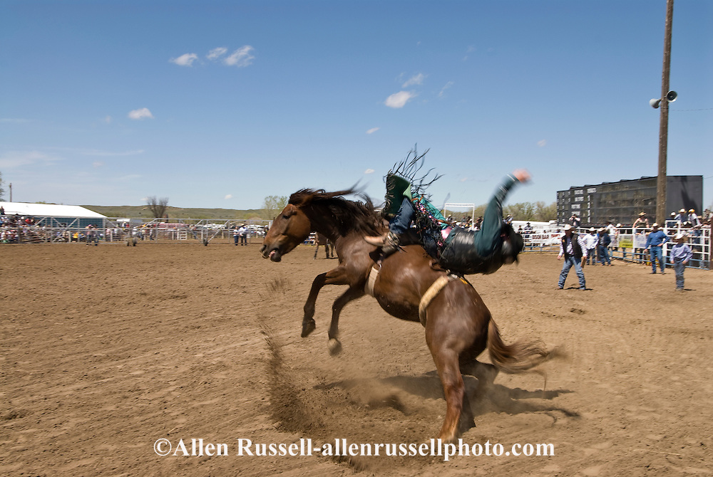 Rodeo, Bareback Bronc rider, Miles City Bucking Horse Sale, Montana, <br /> MODEL RELEASED on rider
