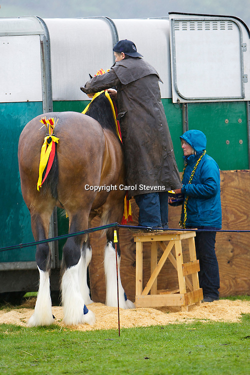 Mrs M Graham's Ellenthorpe Estersons Mascot    S Trmeyddma Mascot     Four year old and upwards  Gelding or Mare Class