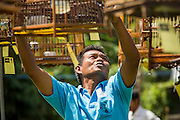 30 OCTOBER 2012 - YALA, YALA, THAILAND:   A judge writes a score on the tag hanging under a bird's cage during a songbird contest in Yala, province of Yala, Thailand. Bird singing contests are popular in Thailand, Malaysia and Indonesia. Owners call to their birds to try to make them sing better, while judges grade the birds on the clarity of its call. The songbird contest season is January to July, but small contests are held throughout the year.     PHOTO BY JACK KURTZ