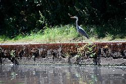 UK ENGLAND LEICESTER 30JUN15 - Wildlife near the river Soar at Leicester city.<br /> <br /> jre/Photo by Jiri Rezac / WWF UK<br /> <br /> © Jiri Rezac 2015