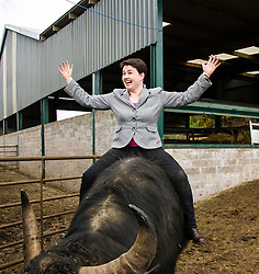 Pictured: Ruth Davidson meet bullock 007<br /> <br /> The Scottish Conservative leader Ruth Davidson visited the Bufallo Farm in Fife today where she toured the facility and met  staff and the animals. She even took a ride on the friendly bullock, 007.<br /> <br /> Ger Harley | EEm 20 April 2016