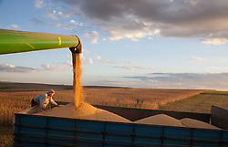 Colheita mecanizada de soja. Pinhal Grande, fazenda Sto.Antonio, Rio Grande do Sul. / Soya Bean Harvest.<br /> Ano 2014. Foto Adri Felden/Argosfoto