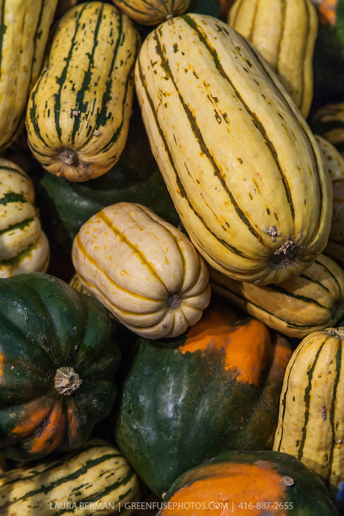Assorted winter squash at a farmers market