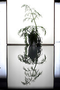 green sprouting twig like plant form silhouette