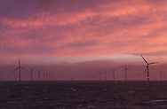 20/03/2014. North Wales, UK. A pink sky at dawn over the Gwynt y Mor Offshore Wind Farm in North Wales this morning, 20th March 2014. Photo credit : Rob Arnold