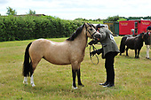 13 - Class 13 - Inhand Mountain and Moorland Small Breeds