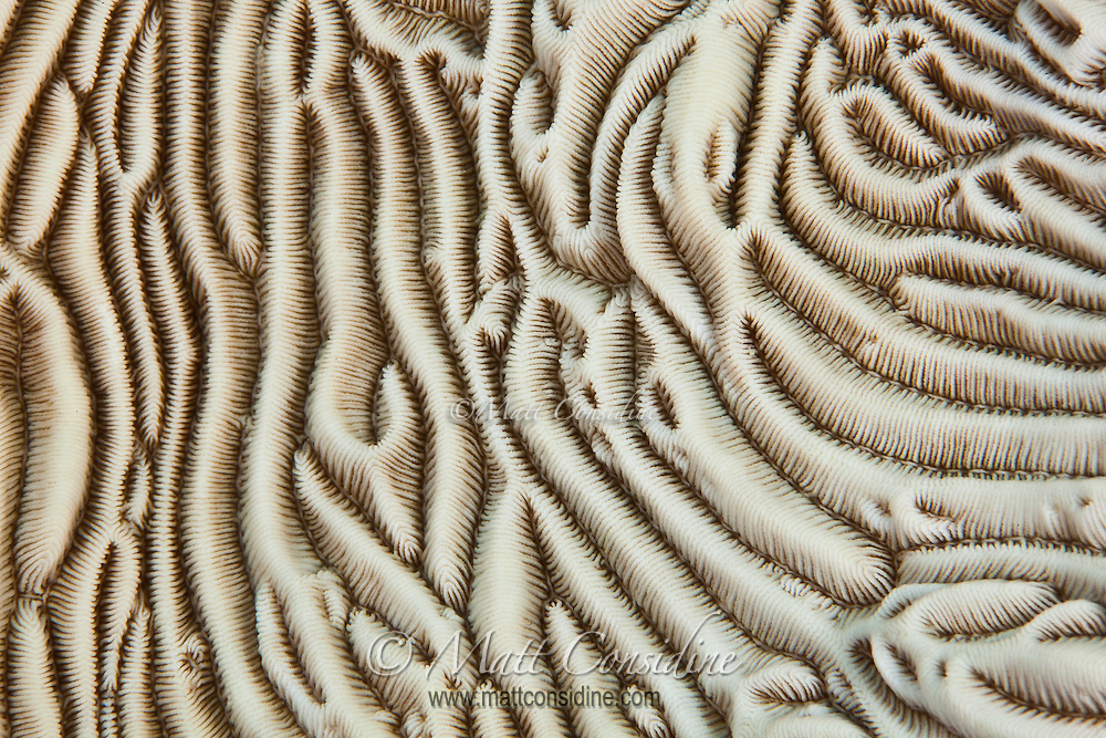 Abstract Macro of coral terrain Palau Micronesia. (Photo by Matt Considine - Images of Asia Collection)
