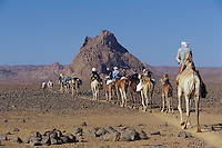 April 2001, Algeria --- Camel Caravan in the Sahara --- Image by © Owen Franken