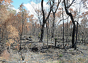 AUSTRALIA - BEDDELUP A general view of  bush fire debris in  Western Australia. 11/01/2010. STEPHEN SIMPSON...