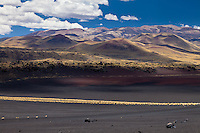 CONOS VOLCANICOS DEL VOLCAN PAYUN MATRU (3.680 m.s.n.m.) Y PAMPA NEGRA, SUELO NEGRO DE PIEDRAS VOLCANICAS Y COIRONES (Festuca gracillima - fam. poaceas), RESERVA PROVINCIAL LA PAYUNIA (PAYUN, PAYEN), MALARGUE, PROVINCIA DE MENDOZA, ARGENTINA (PHOTO © MARCO GUOLI - ALL RIGHTS RESERVED)