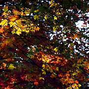 Fall Foliage near Asheville on the Blueridge parkway.