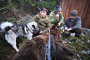 Bear hunter Jon Einar Nymoen with the bear hunting veteran, Storbringens Strix. The norwegian elkhound have hunted 40 bears. Elghunden Strix har vært med på felling av 40 bjørn. Young hunter Jon Einar Nymoen (left) and Odd Jarle Lien from the sheep farmers organisation (Sau og Geit)interviewed by the journalist Hans Bårdsgård (Nationen).