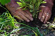 Spring Community Planting Day