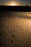 Pleistocene human footprints: Willandra Lakes in southeastern Australia.A A series of human prints found on traditional land. Bond university professor Steve Webb believes the prints date back to 19-23 ka from a small wetland surface at the height of the last glacial period. The tracks are of a small child and they possibly extend beyond the current site.