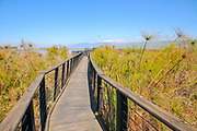 Israel, Hula Valley, wooden bridge footpath, Agmon lake in March