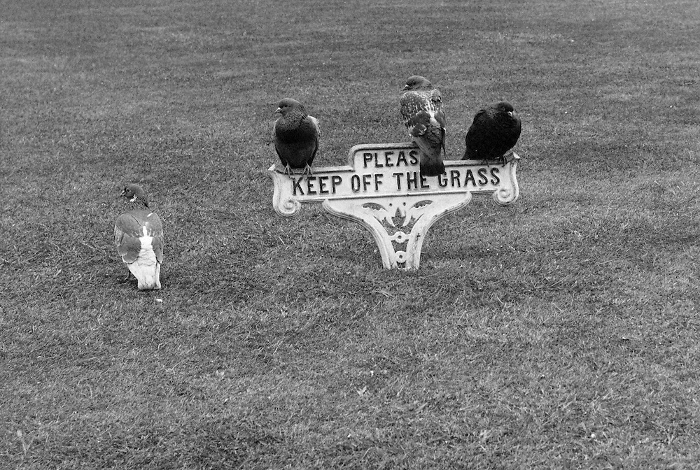 """Keep off the Grass"" Sign, Kent, England, 1932"