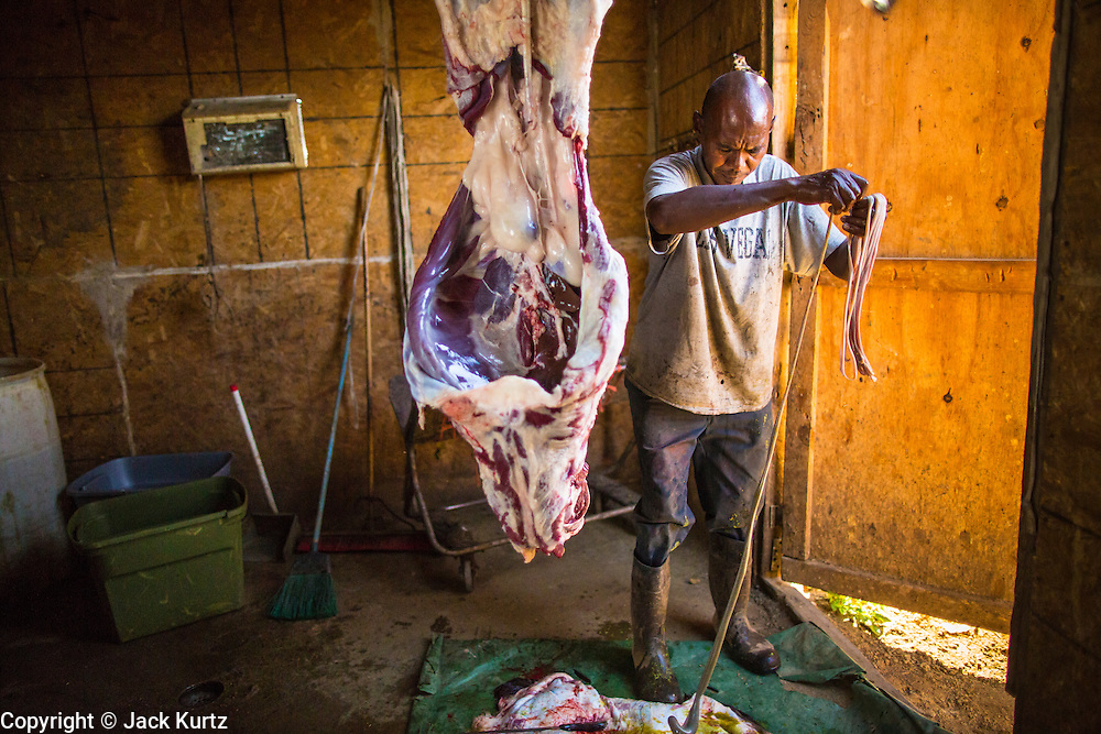 16 JUNE 2012 - GILA RIVER INDIAN COMMUNITY, PHOENIX, AZ: Ibrahim Swara-Dahab pulls the intestines out of a freshly slaughtered sheep in the killing room on his goat farm. Swara-Dahab, 57, left Somalia in 1993. He lived in a refugee camp in Kenya for five years before coming to the United States and in 2006 settled in the Phoenix. He got a $10,000 loan from the micro-enterprise development program for refugees. The money allowed him to buy dozens of goats and sheep, each worth $130 to $200, turning his one-sheep operation into a money-making, time-consuming herd. He now operates a full time goat ranch and slaughter house. He slaughters his goats and sheep in the Muslim halal tradition. Most of his customers are fellow refugees and Muslims who prize goat meat or eat only meat slaughtered according to halal traditions. Immigrants also prize parts of the body, like stomach linings and intestines, not available in main stream butcher shops. His butchering operation is on the Gila River Indian Community, near Laveen, AZ, just southwest of Phoenix.   PHOTO BY JACK KURTZ