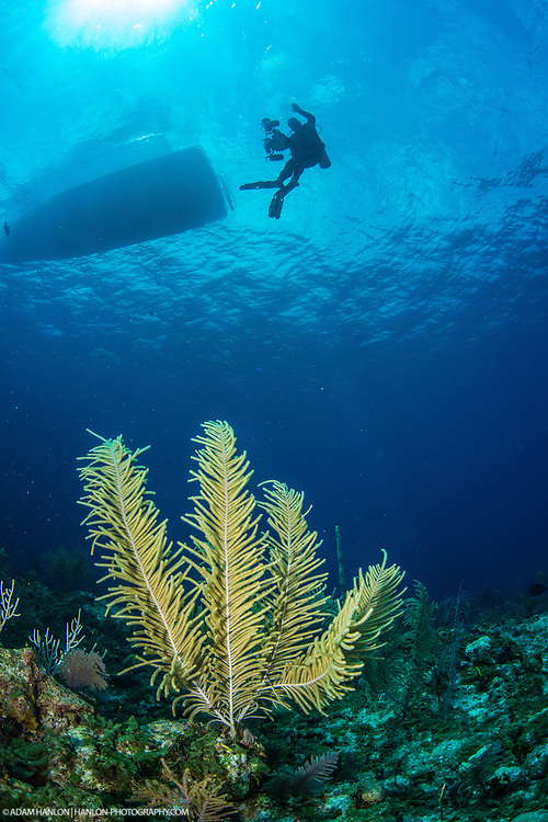 Pro underwater photographer, Alex Mustard, waves for thr camera while making his return to the dive boat. Taken on assignment during the Bahamas Underwater Photo week 2014.