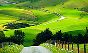 Pastoral farmlands, Canterbury Plains , South Island,New Zealand