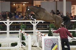 068 - Curado vant Koningshof Z<br /> Hengstenkeuring BWP - Azelhof - Koningshooikt 2015<br /> ©  Dirk Caremans