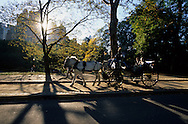 NeW York. horse car in Central park,  Hansom cabs, Manhattan  New York  Usa /  caleches dans Central park les - Hansom cabs - carrioles à cheval  New York  USa
