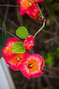Enchanting Floral Gardens, Kula, Maui, Hawaii