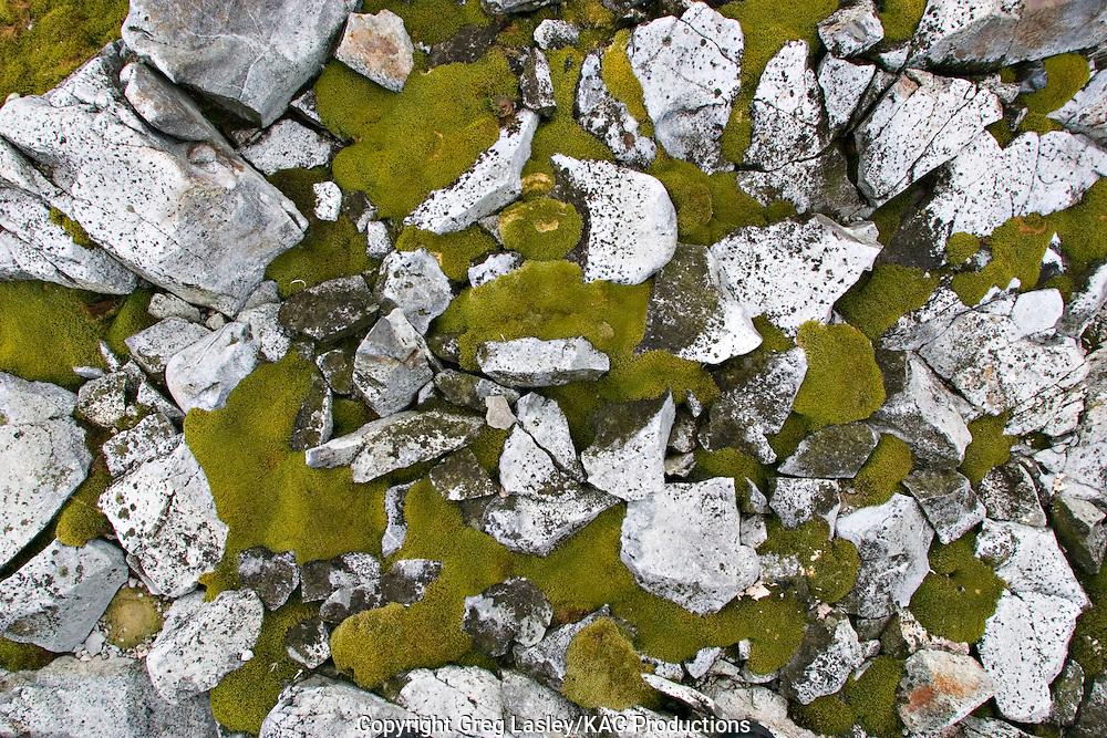 Moss & rocks.Peterman Island, Antarctica.30 Januaey 2003