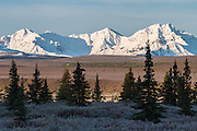 Mountains of The Alaska Range above fall colors of the tundra, Denali National Park, Alaska