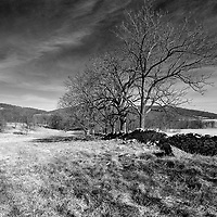 Bare trees in a rural landscape