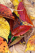 This detail creates a fiery palate of fall leaves