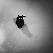 Kozo's black cat
