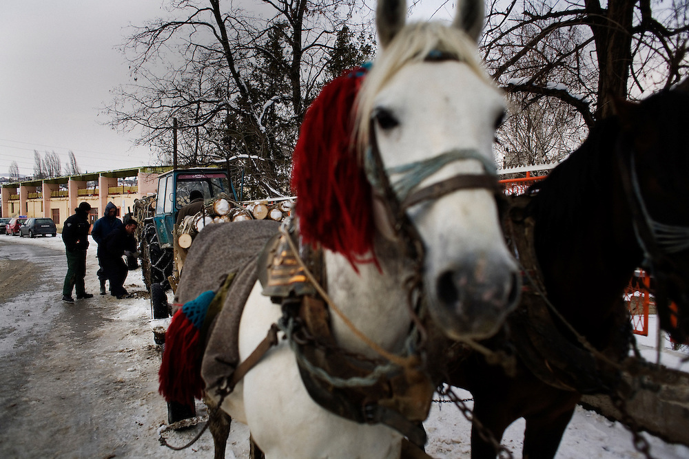 Horses used to draw carts full of firewood outside of the Mitrovica market.