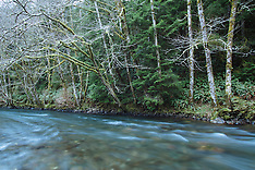 North Fork Nehalem Fishing Photos - Stock images