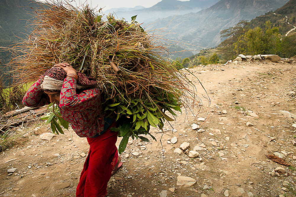 — It's not uncommon for villagers to walk several kilometers through rugged terrain just to gather fodder for their livestock or sugar cane for their children. But it's a dying practice that the young eschew, as they are no longer happy living traditional lifestyles.