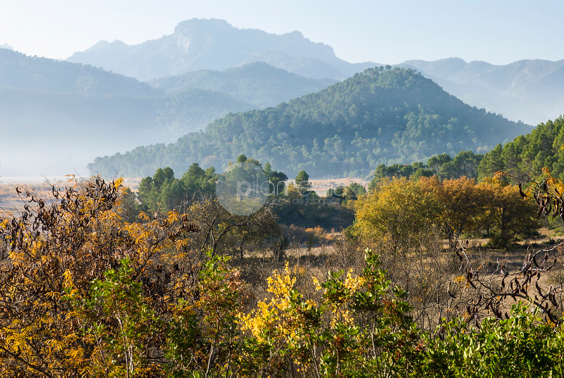 Otoño en el Valle del Guadalquivir.Parque Natural de Cazorla, Segura y las Villas.Jaen. ©Antonio Real Hurtado / PILAR REVILLA