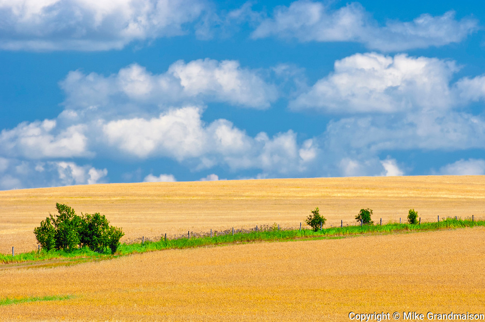 Mature Winter wheat crop<br />  and clouds<br /> <br /> Manitoba<br /> Canada