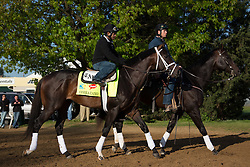 Derby 139 hopeful Verrazano, left with Humberto Zamora up is led out to the track after the renovation break during morning workouts Tuesday, April 30, 2013 at Churchill Downs in Louisville. Photo by Jonathan Palmer